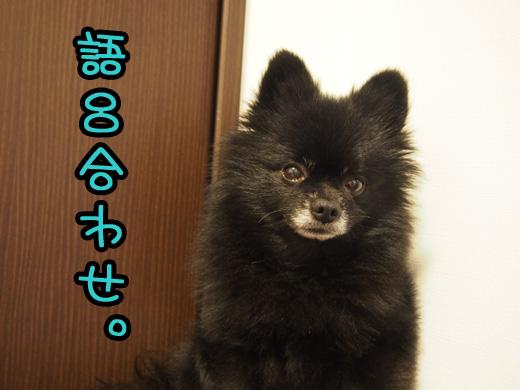 goroawasenomyoudesune.jpg