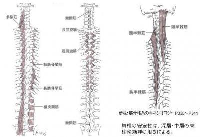 胸椎の安定化筋