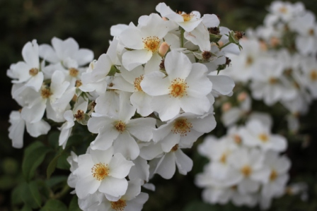 白・キュー・ガーデン
