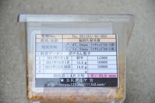 DSC_3179_convert_20121206151706.jpg