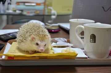 cafehari.jpg