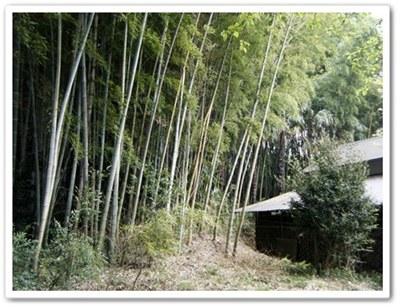 孟宗の竹林