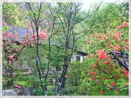 庭のヤマツツジ