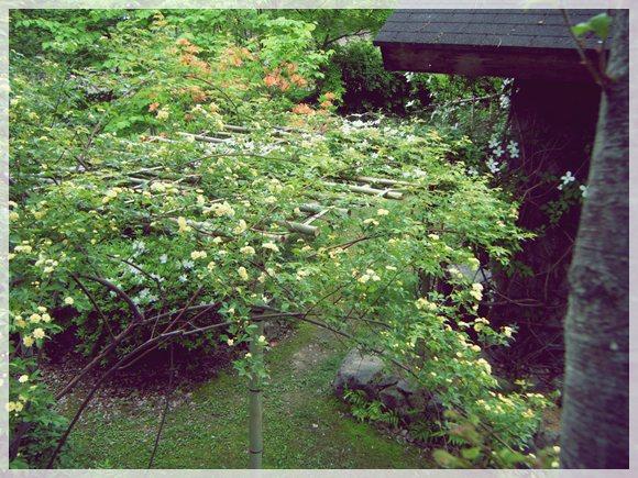 竹パーゴラの上