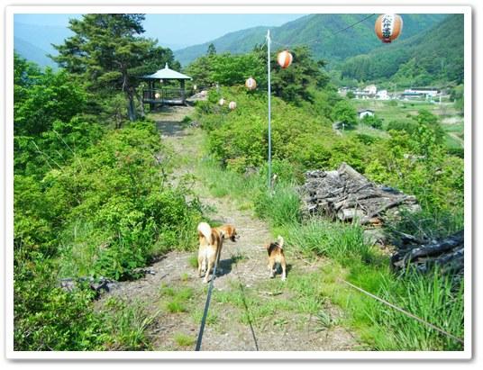 武石公園とボンボリと犬