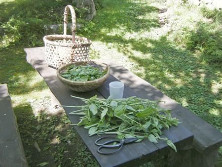 葉っぱ摘み取り