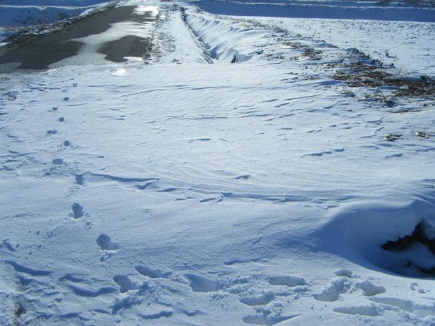 雪の模様でもあるわけで