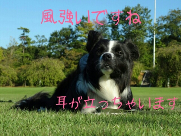 fc2blog_20120927012755039.jpg