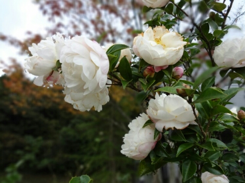fc2blog_2012110700324089f.jpg