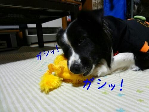 fc2blog_20121109001204323.jpg