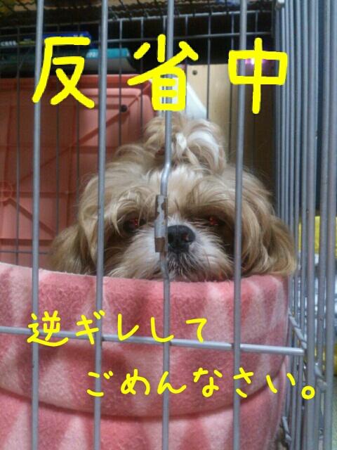 fc2blog_20121113012854984.jpg