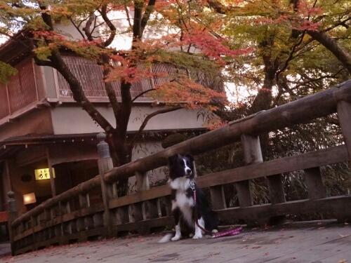 fc2blog_20121118234856fab.jpg