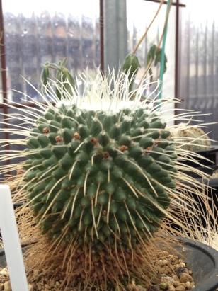 fc2blog_20121230162450811.jpg