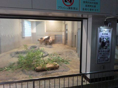 上野動物園 ジャイアントパンダ シンシン
