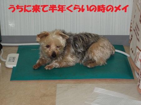 大阪 里親 小型 犬