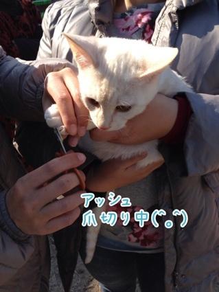 fc2blog_2014011916041657c.jpg