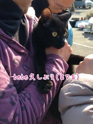 fc2blog_2014011916281381e.jpg