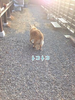 fc2blog_20140121160855d9e.jpg