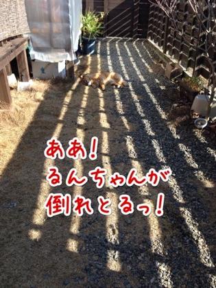 fc2blog_20140123142811df6.jpg
