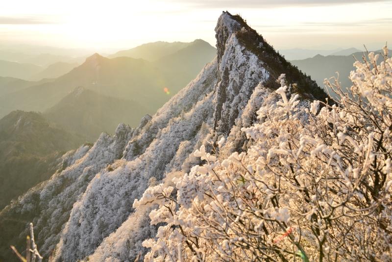 「金色に輝く石鎚」 (愛媛県石鎚山天狗岳)