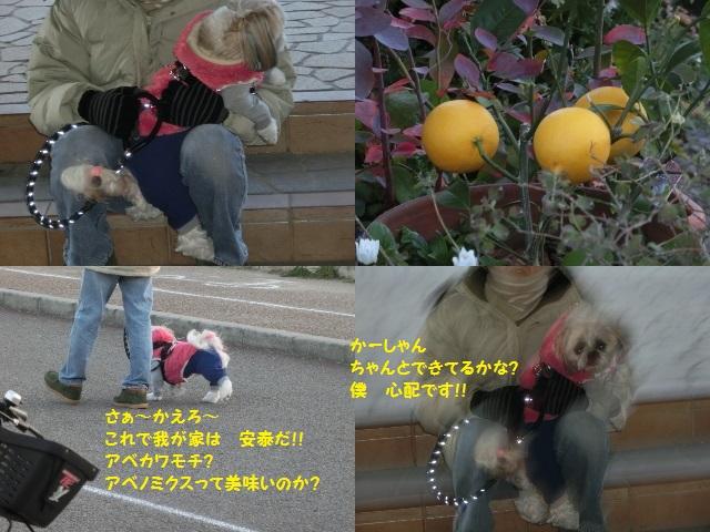 20141214122601b85.jpg