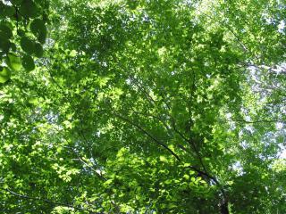 ブナ林の木漏れ日