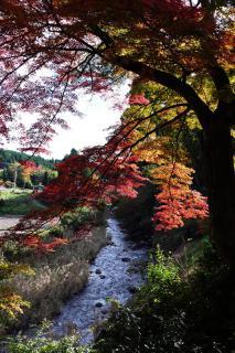 浄蓮寺の紅葉