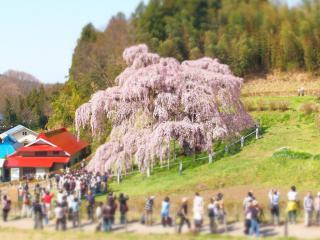滝桜 ジオラマ