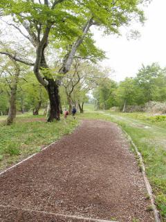 ブナ林遊歩道