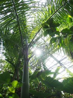 熱帯植物館