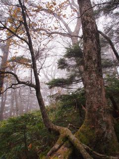 明神岳 遊歩道