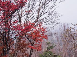 明神岳 紅葉