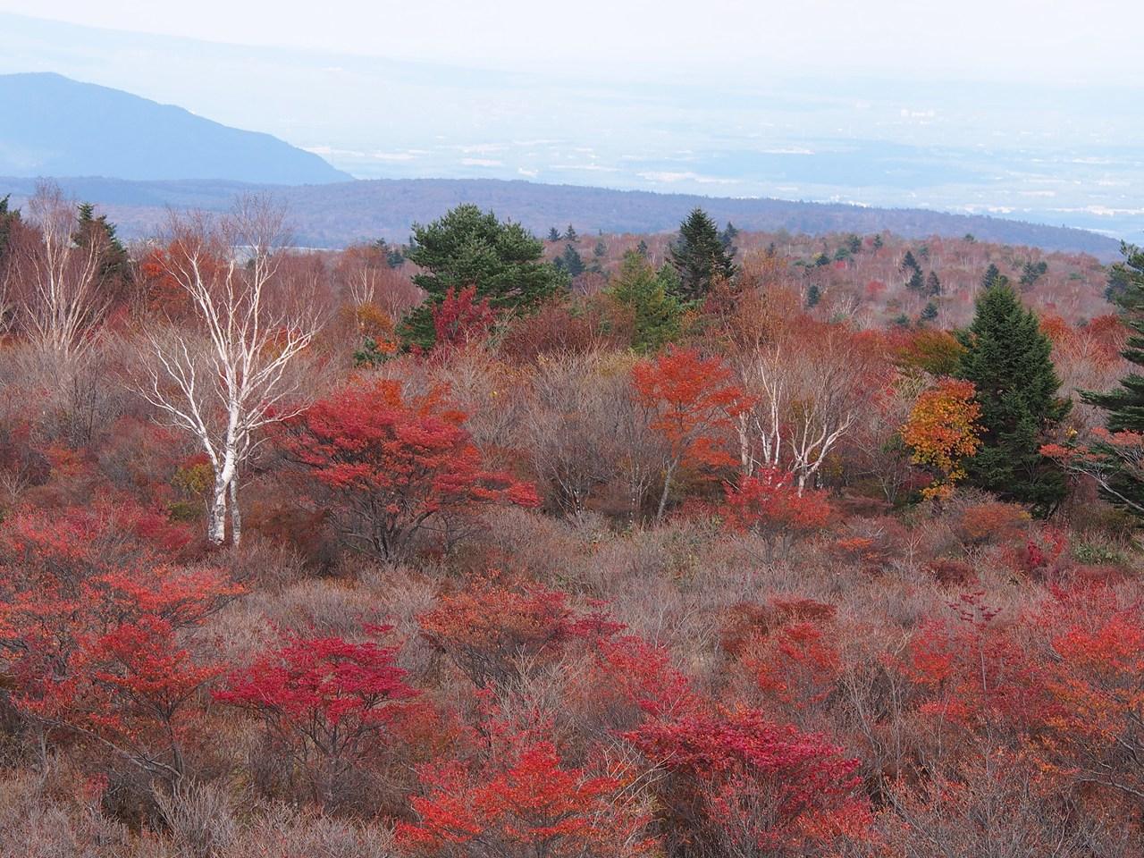八方ヶ原の紅葉