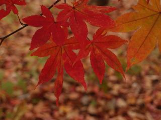 塩原の紅葉