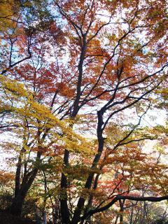 紅葉(生瀬の滝付近)