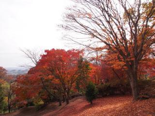 三王山の紅葉