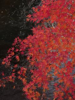 江川の紅葉