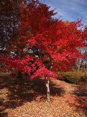 笠間周辺の紅葉