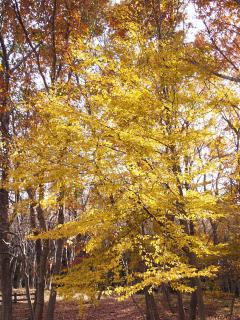 北山公園の紅葉