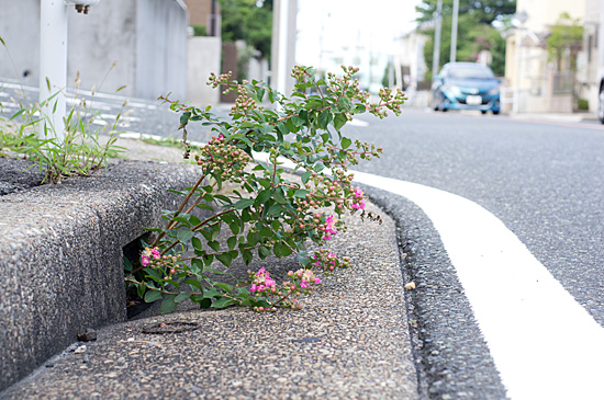 道行き-4
