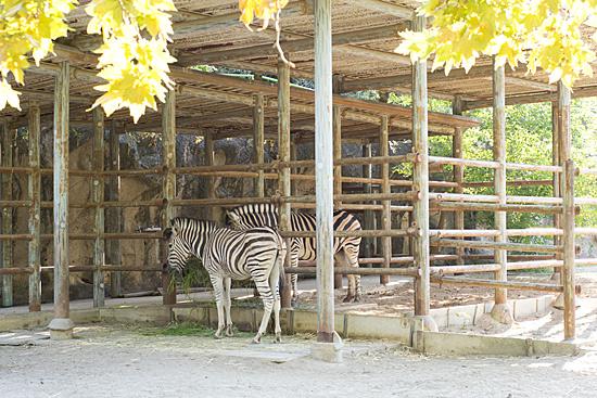 東山動物園-8
