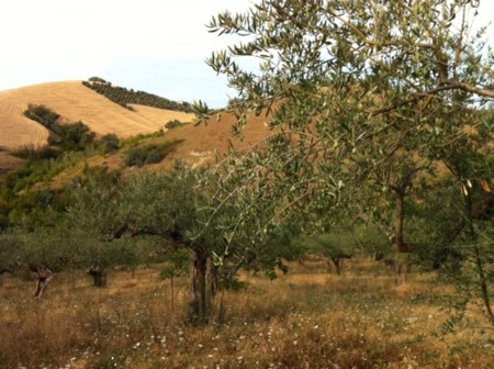 アサクラ農園3