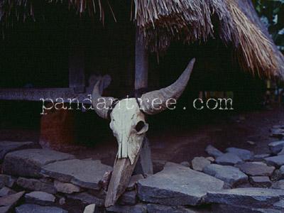 フローレス島水牛の飾り