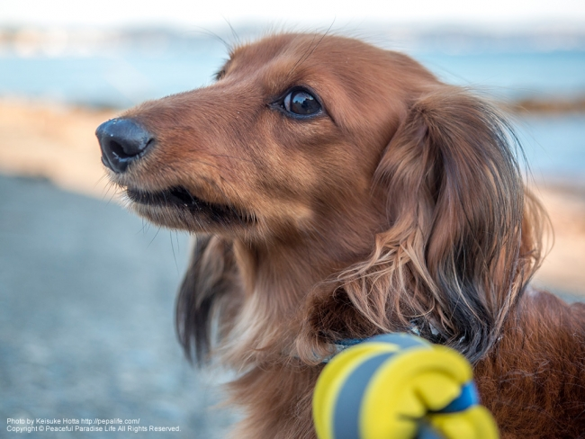 海とミッキー(ウチの犬) [A] SS1/800 F2.8 ISO100