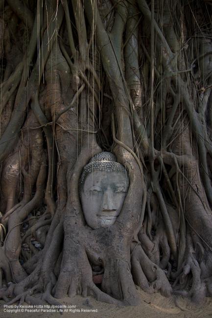 ワット・マハータート(Wat Mahathat)の仏頭