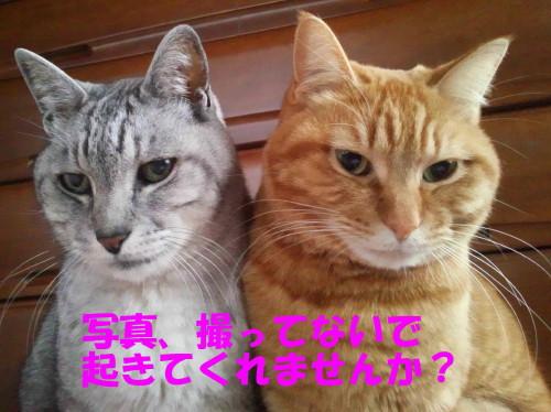booako_201303041840.jpg