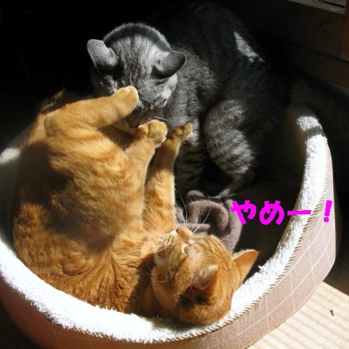 booako_20130312.jpg