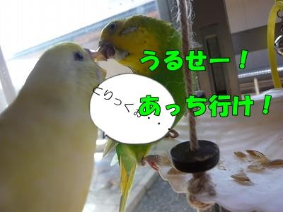 s-P1090848.jpg