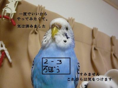 s-P1100950.jpg