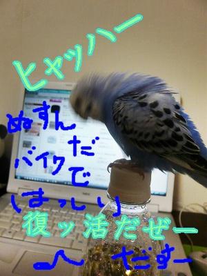 s-P1130698.jpg